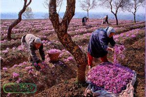 صادرات زعفران سوپر نگین پرسی در بستر دیجیتال مارکتینگ